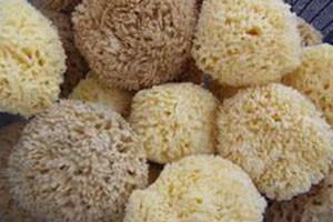 city hall farmers market - logo for St. John's sponges